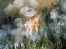 Спасатели России и Монголии планируют использовать беспилотники для мониторинга пожаров