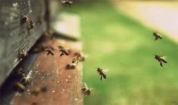 К сохранению популяции пчел подключили геоинформационную систему